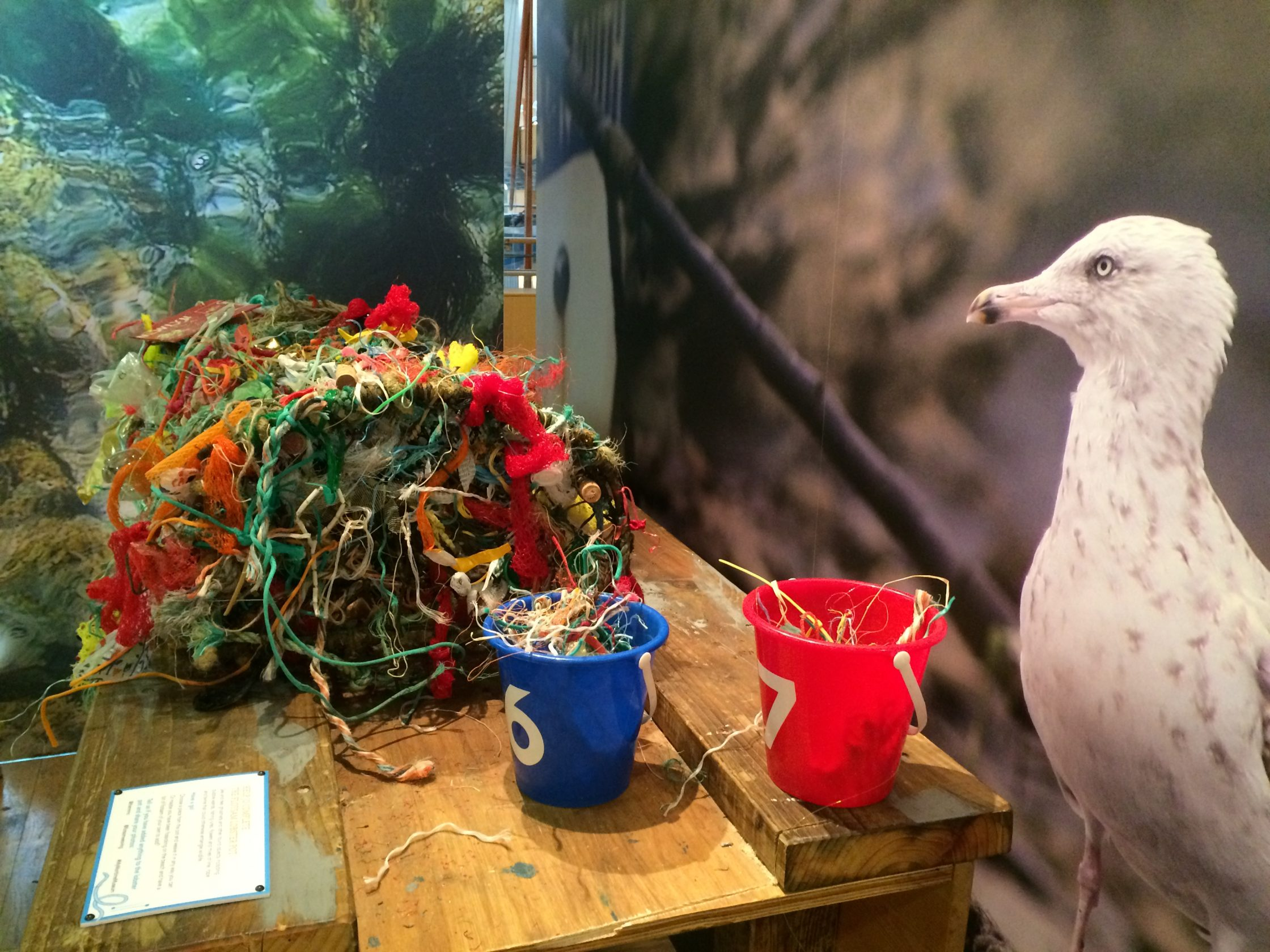 Lobster pot exhibit covered in plastic and marine litter.